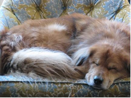 bonus-dog-22508.jpg