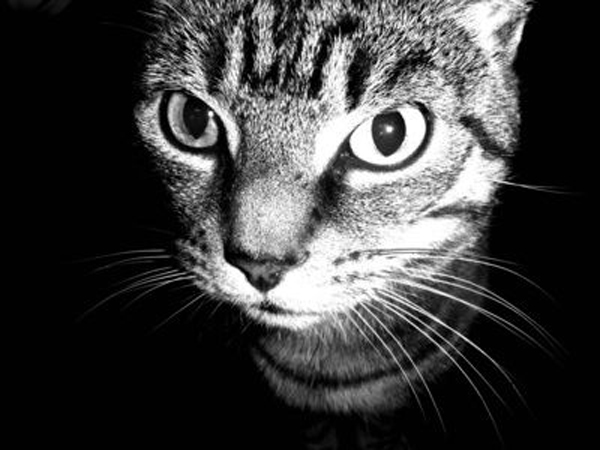 article-new_ehow_images_a06_11_5h_feline-nausea-medication-800x800